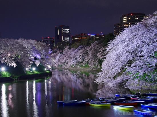 Perahu di taman Chidorigafuchi