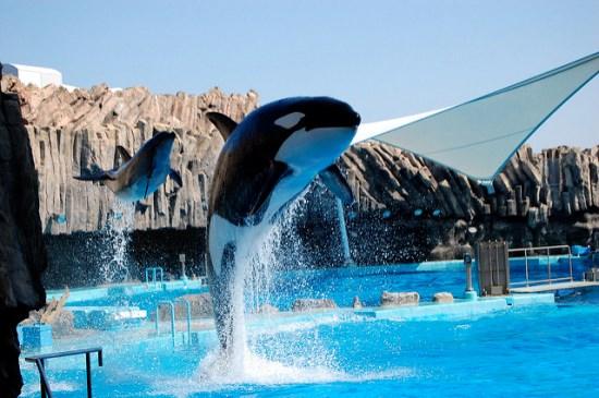 Pertunjukan Paus Orca di Akuarium Nagoya