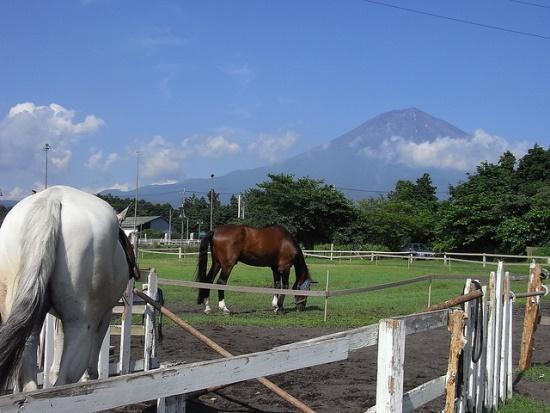Peternakan kuda di Fuji Milk Land