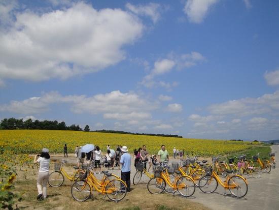 Rental sepeda mengelilingi Himawari no Sato