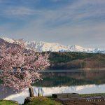 Sakura dan salju di Danau Nakatsuna Hakuba