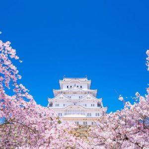 Sakura di Kastil Himeji