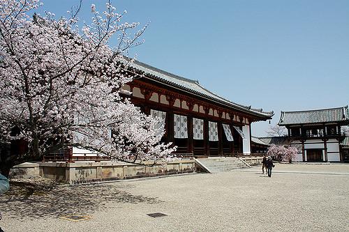 Sakura di Kuil Horyuji