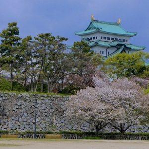 Sakura di Nagoya Castle