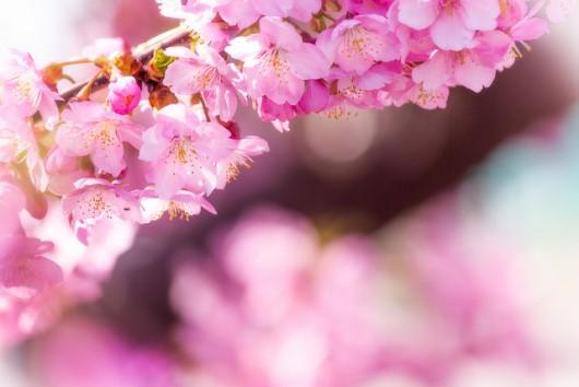 Menikmati Musim Semi Di Jepang Info Liburan Dan Wisata Jepang