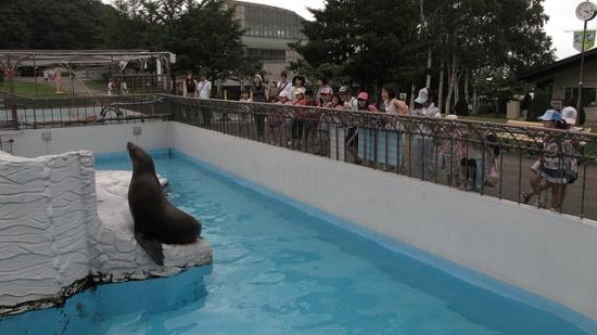 Singa laut di Kebun Binatang Maruyama