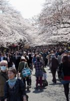 Tempat Wisata di Tokyo Taman Ueno