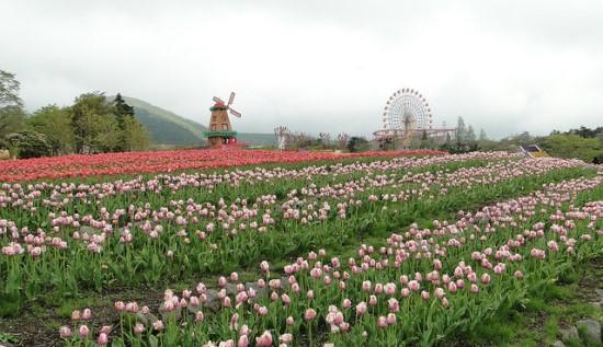 Suasana Heavenly Tulip Festival di Taman Bunga Grinpa