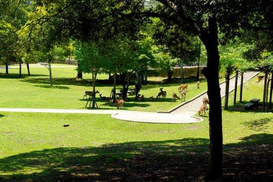 Suasana Nara Park selatan