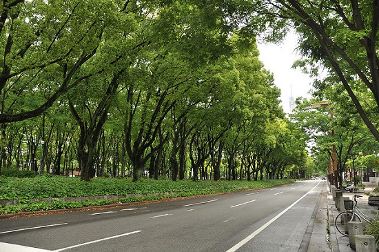 Suasana Odori Park Sapporo di siang hari