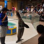 Suasana atraksi di Miyajima Aquarium
