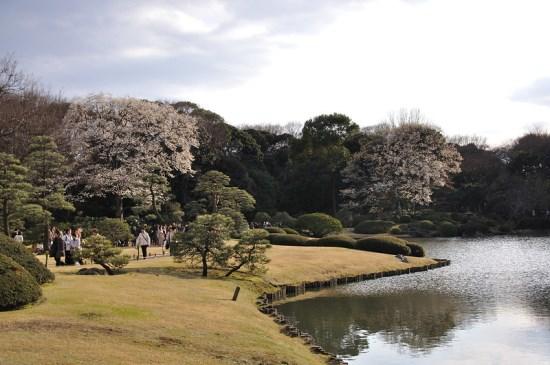 Suasana bunga saat Rikugien Garden Sakura 2020
