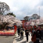 Suasana bunga sakura di Kuil Hirano