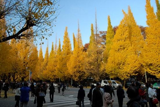 Suasana di jalan Icho Namiki Taman Jingu Gaien
