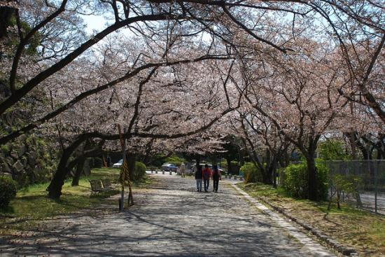 Suasana hanami di Taman Ohori Fukuoka
