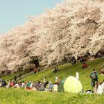Suasana hanami di Taman Sewaritei Kyoto