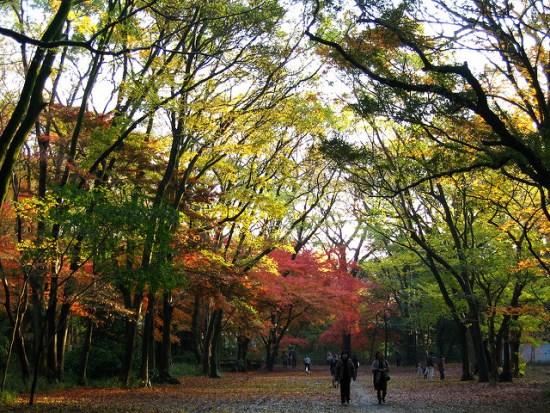 Suasana hutan di Kuil Shimogamo
