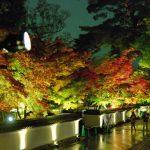 Suasana iluminasi malam di Kuil Eikando