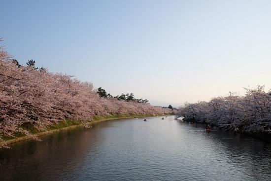 Suasana kanal Kastil Hirosaki saat musim sakura