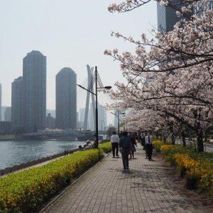 Suasana saat Sumida Park Sakura 2020