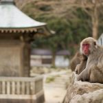 Takasakiyama Monkey Park di Beppu