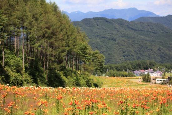 Taman Lily Hunter Mountain
