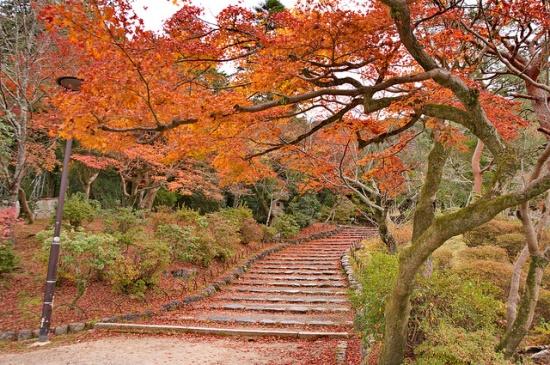 Taman Maruyama dekat Kuil Chionin Kyoto