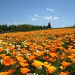 Taman bunga di Takino Suzuran Hillside Park