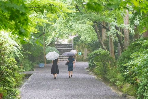 Taman samping Kuil Ryoanji Kyoto