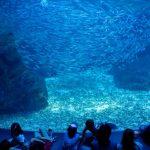 Tangki raksasa dengan puluhan ribu ikan di Kyoto Aquarium
