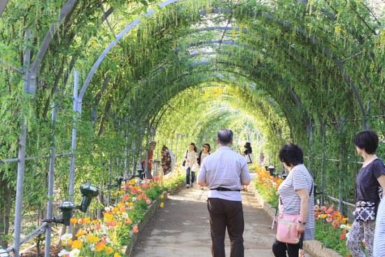 Terowongan bunga di Taman Ashikaga