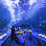 Terowongan di Akuarium Shinagawa