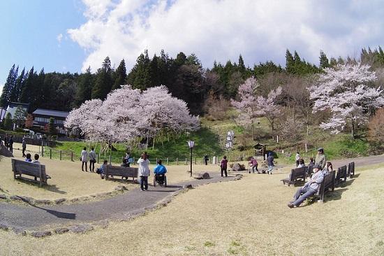 Hanami Garyu Park Sakura 2020