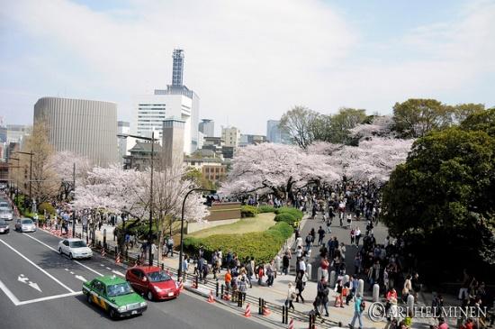 Yasukuni Jinja pada saat musim semi