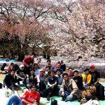 hanami bersama di shinjuku gyoen