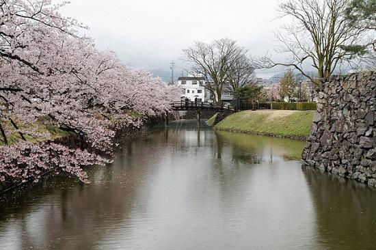 hanami sakura di Kastil Matsumoto
