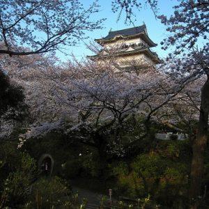 hanami sakura di Kastil Odawara