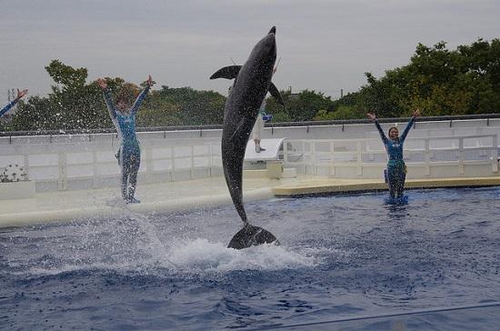 kyoto aquarium pertunjukan lumba-lumba