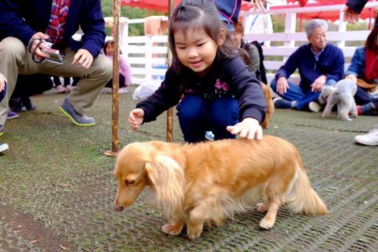 Menyentuh hewan langsung di Kebun Binatang Zoorasia