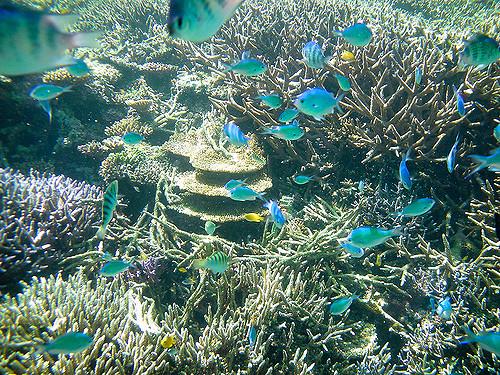 pemandangan bawah laut okinawa