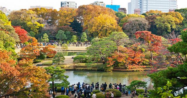 rikugien garden at fall