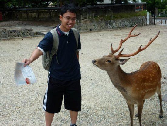 Rusa di Nara Park