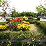 umekoji park flower